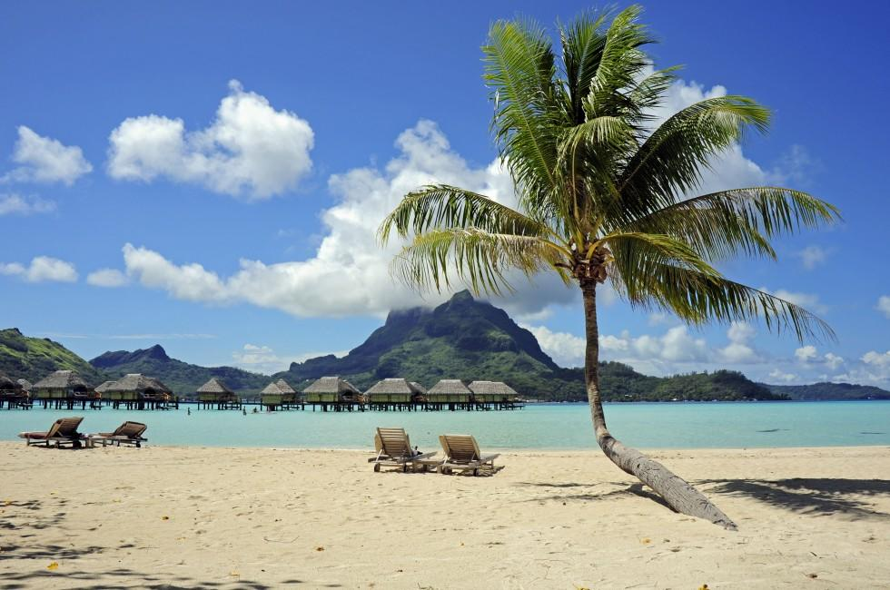 Beach, Palm, Resort, Bora Bora with Maupiti, French Polynesia, Australia and the Pacific