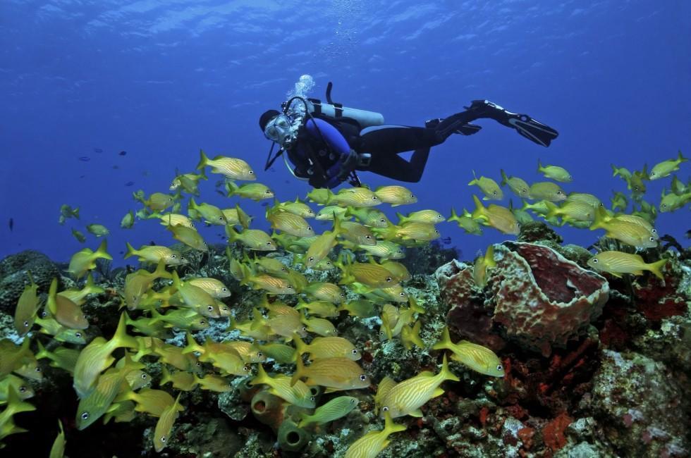 Scuba Diver, Cozumel, Mexico