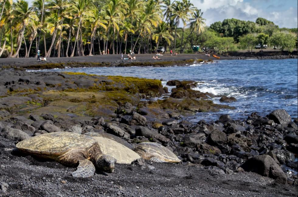 Turtles, Punaluu Black Sand Beach Park, Kau, Big Island, Hawaii, USA