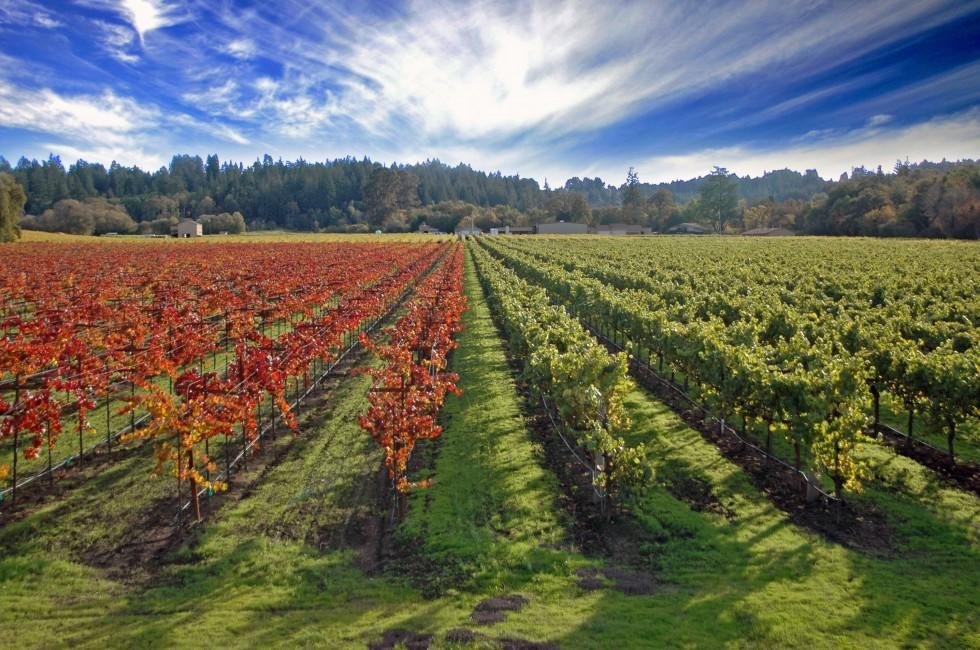 Vineyards, Sonoma Valley, California, USA