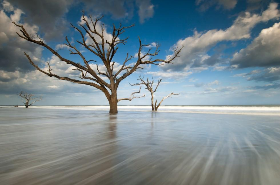 Beach Tree, Bay Boneyard Beach, Edisto Island, Charleston, South Carolina, USA