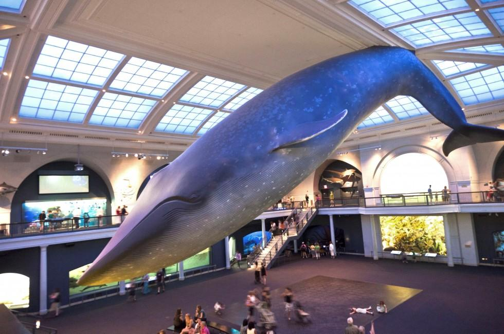 Whale, American Museum of Natural History, Upper West Side, New York City, New York, USA