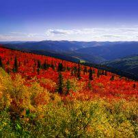Dawson Range, Fall, Yukon Territory, Canada