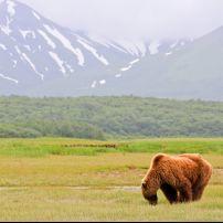 Brown Bear, Hallow Bay, Katmai National Park, Alaska