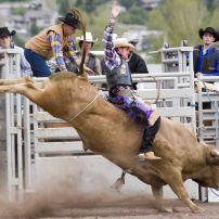 Cowboy, Bull, Rodeo, Missoula, Montana