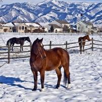 Bozeman, Montana, USA