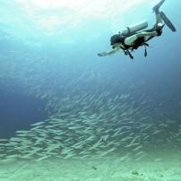 Diver, Fish, Phuket and the Andaman Coast, Thailand