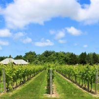 Winery, Long Island, New York