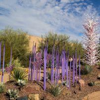 Desert Botanical Garden, Phoenix, Arizona, USA