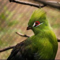 Close-Up, Bird, San Antonio Zoo, San Antonio,