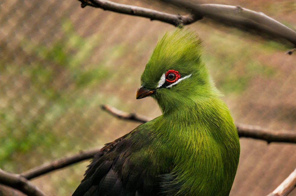 Close-Up, Bird, San Antonio Zoo, San Antonio,