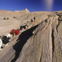 goat packing in grand escalante staircase national park, Utah