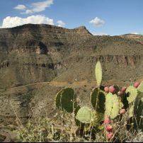Prickly Pear Cactus, Winding Mountain Road, Holbrook, Arizona