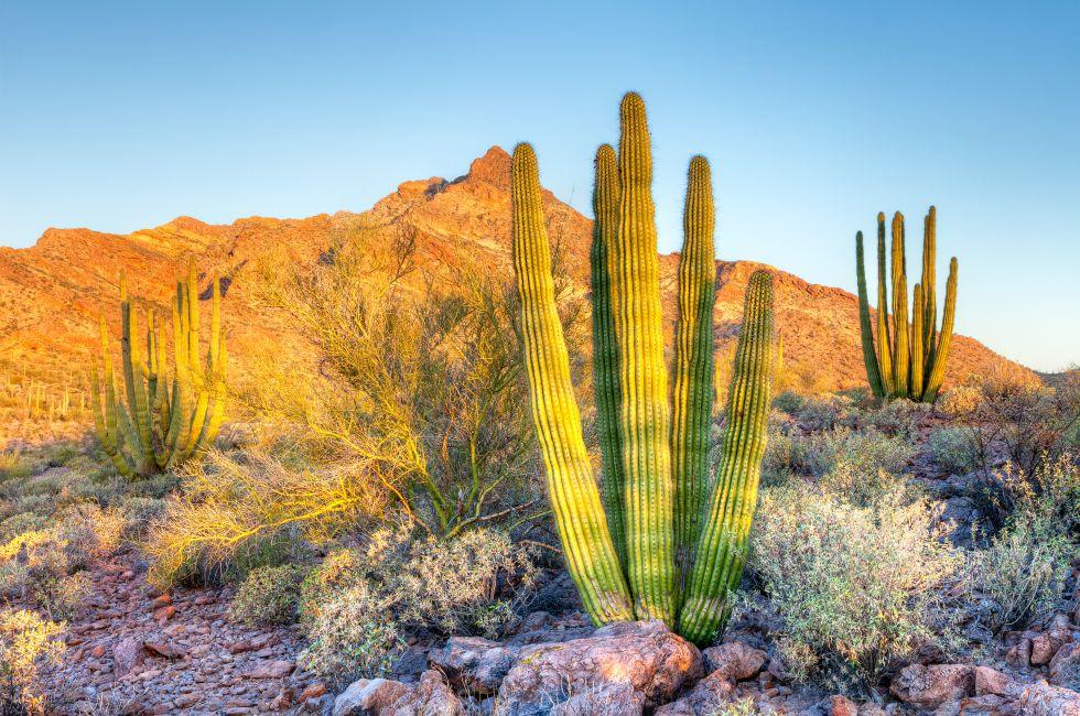 Southern Arizona Photo Gallery Fodor S Travel