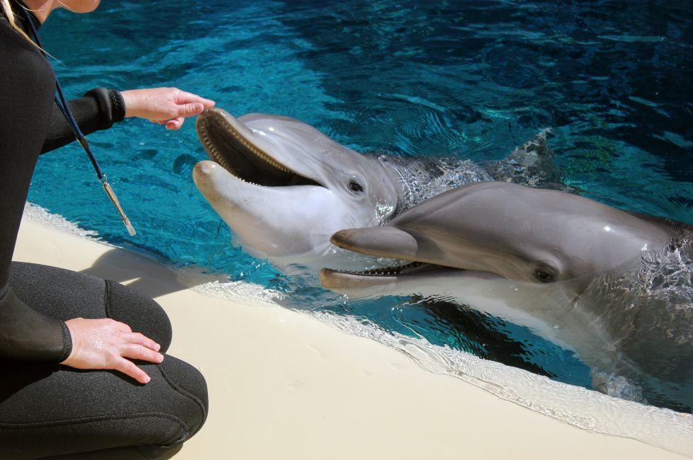 Dolphins, Siegfried & Roy's Secret Garden & Dolphin Habitat, Las Vegas, Nevada, USA