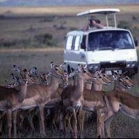Gazelle, Kenya, Africa