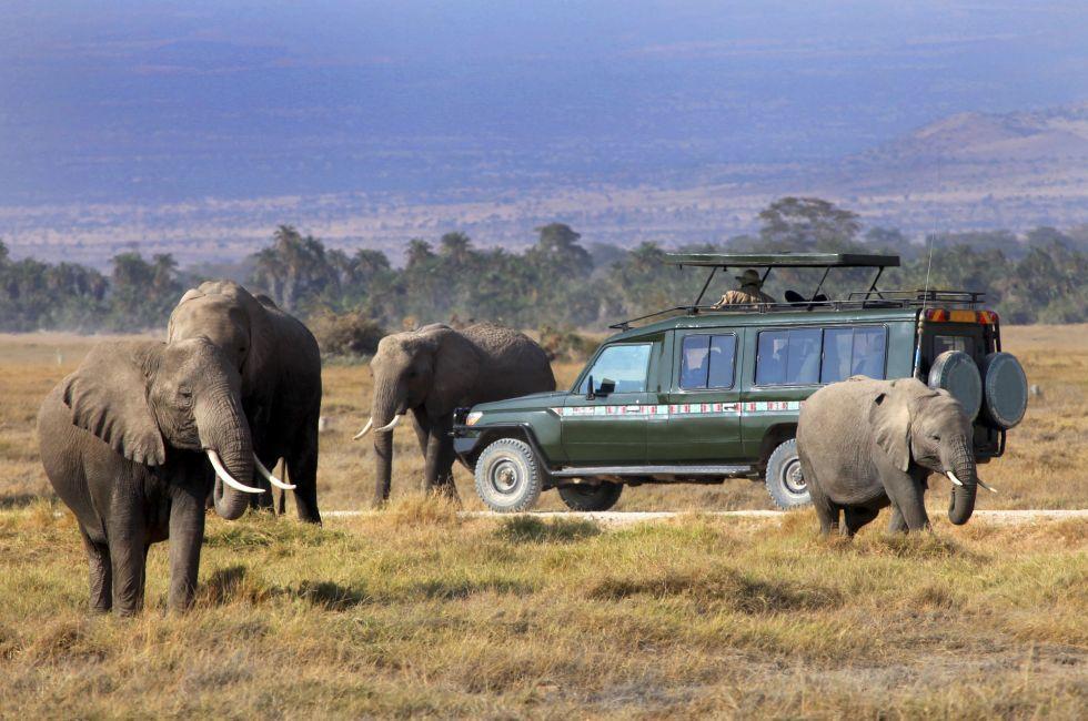 Elephants, Game Drive, Masai Mara, Kenya