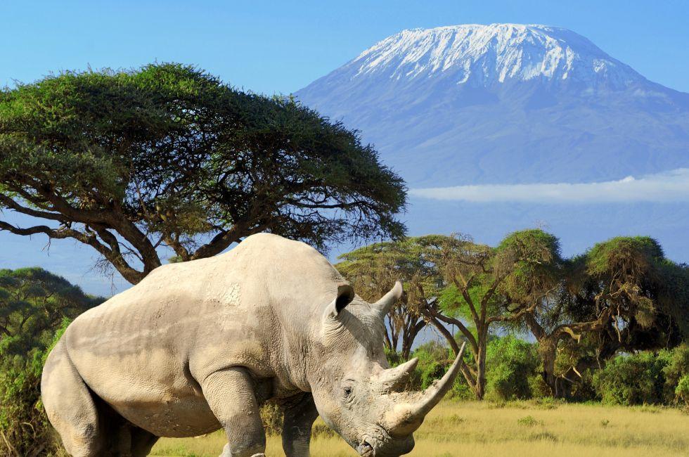 Rhino, Mount Kilimanjaro, Amboseli National Park, Kenya, Africa