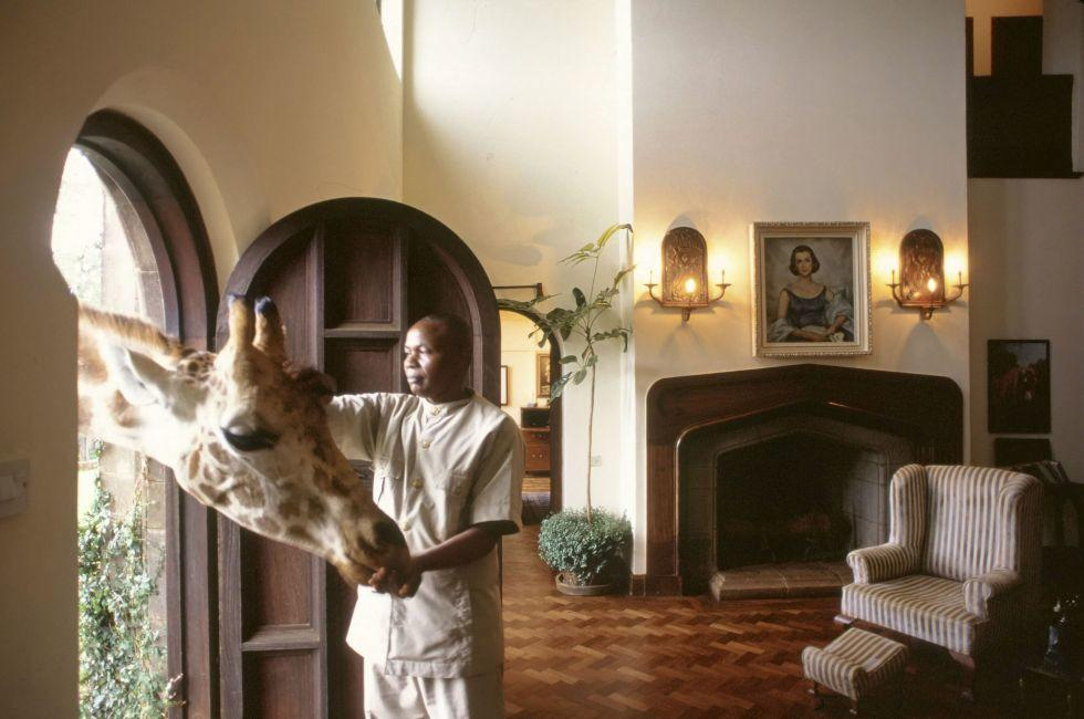Giraffe, Living Room, Giraffe Manor, Nairobie, Kenya
