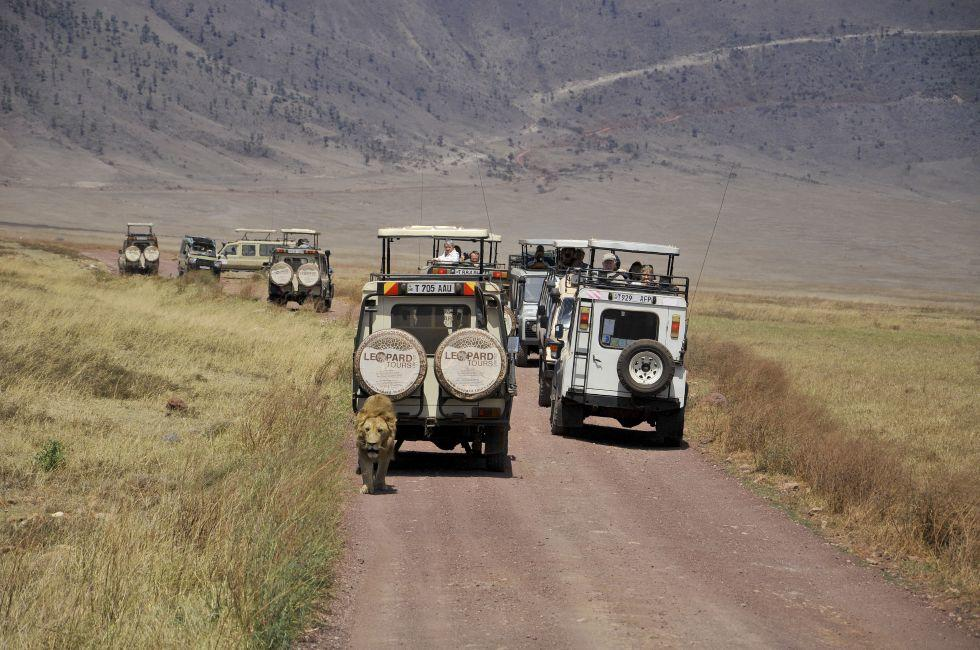 Safari, Serengeti National Park, Ngorongoro, Tanzania