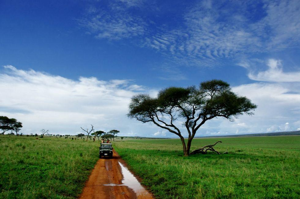 Safari, Tarangire National Park, Tanzania