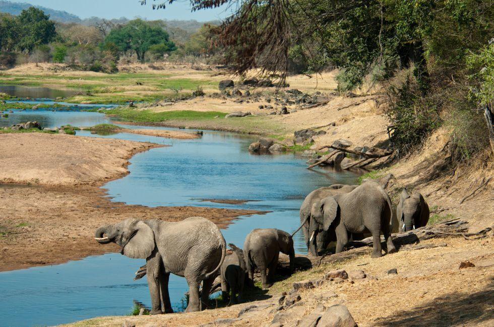 Elephants, Great Ruaha River, Ruaha National Park, Tanzania