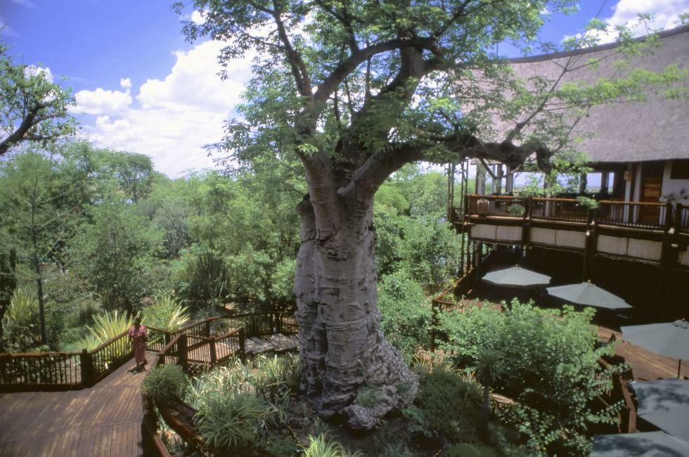 Botswana Game Reserve