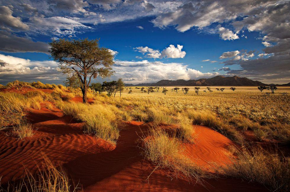 Tree, Red Dunes, Namibia, Africa