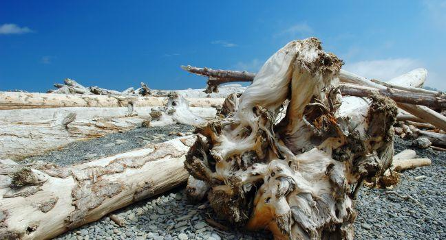 Driftwood, Logs, Beach, Dungeness Spit, Washington