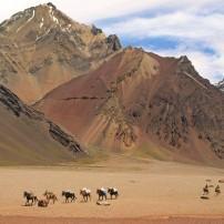 Horses, Hikers, Desert, Andes, Wine Regions, Argentinas