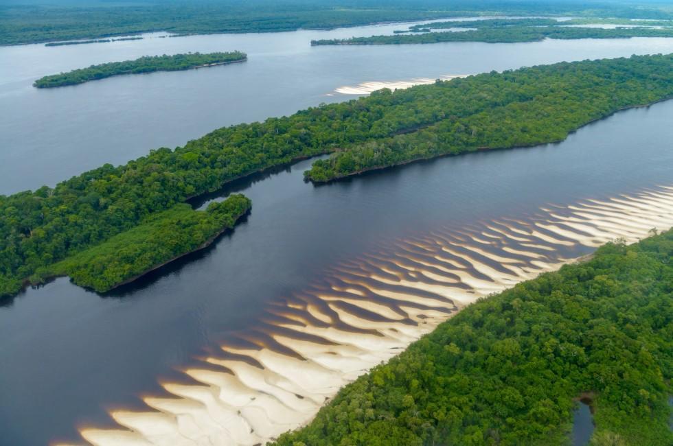 Rainforest, Rio Negro, Anavilhanas National Park Islands, The Amazon, Brazil
