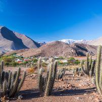 Cactus, Andes Mountains, Elqui Valley, Chile