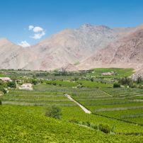 Vineyards, Elqui Valley, Chile