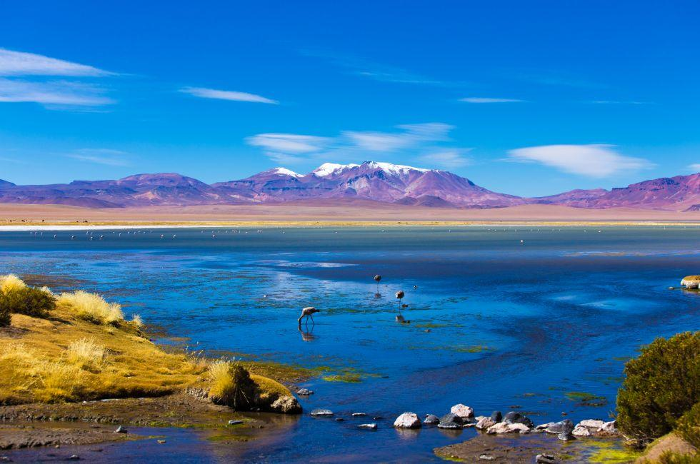 Flamingos, Atacama Desert, Chile