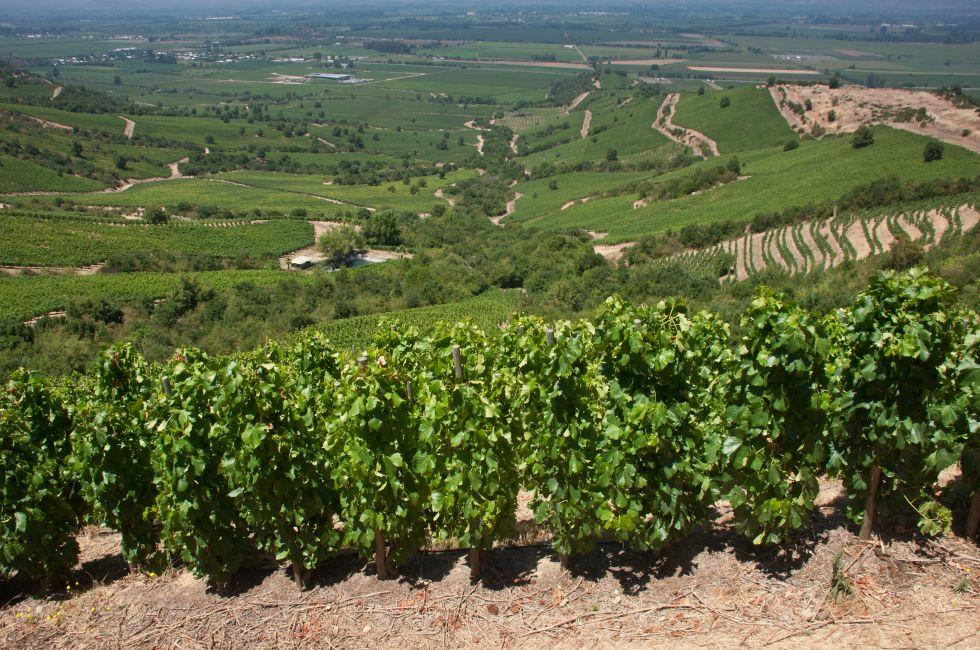 Apalta Valley Vineyard, Central Valley, Chile