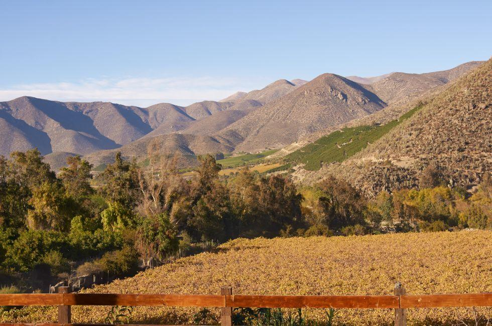 Vineyards, Limari Valley, Chile