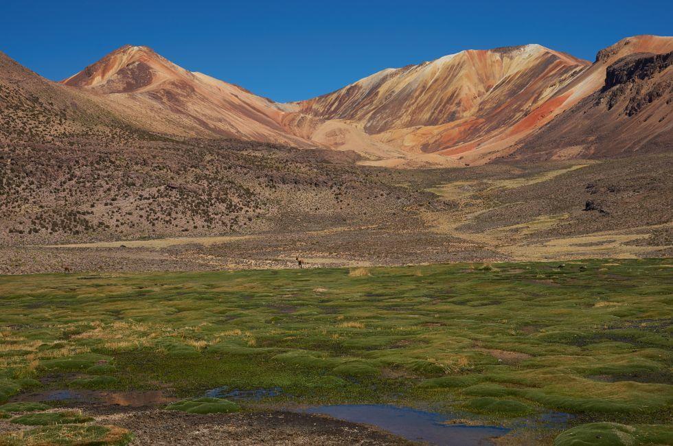 Lauca National Park, El Norte Grande, Chile