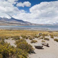 Chungara Lake, Parinacota Volcano, Lauca National Park, Chile