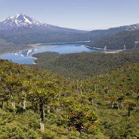 Llaima Volcano, Conguillio National Park, Chile