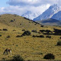 Entrance to Torres Del Paine, Guanaco, Chile