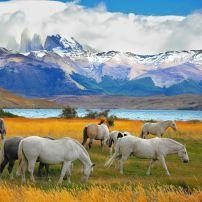 Horses, Meadow, Lake, Torres del Paine National Park, Patagonia, Chile