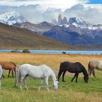 Horses, Torres del Paine Park, Chile