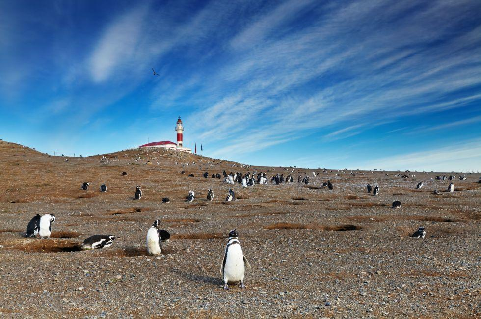 Magellanic Penguins, Magdalena Island, Strait of Magellan, Chile