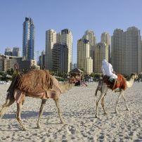 Camels, Jumeirah Beach, Dubai, UAE