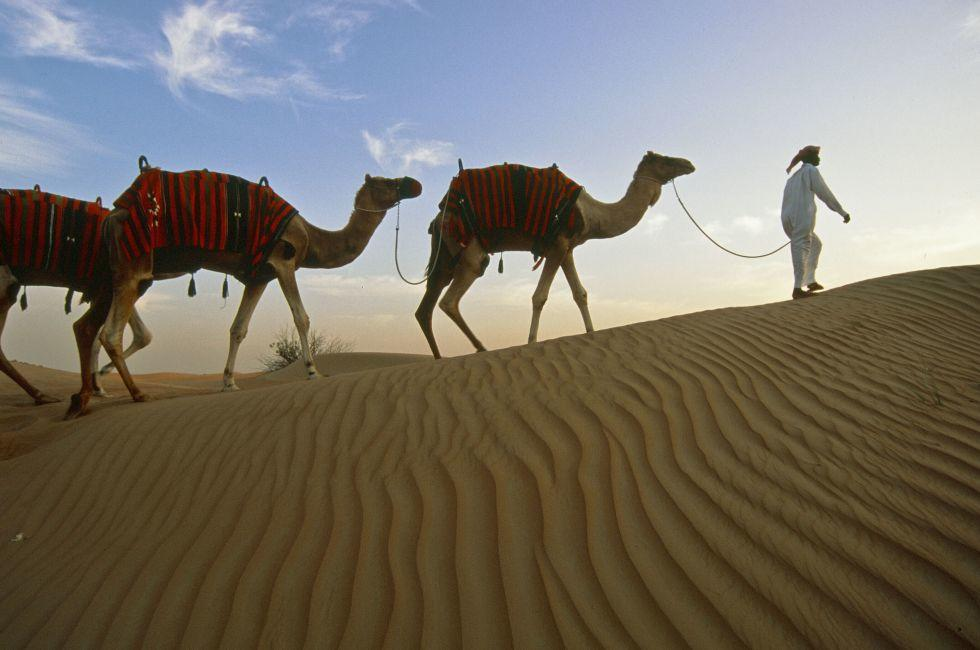 Camel Excursion into Empty Quarter, Lahbab