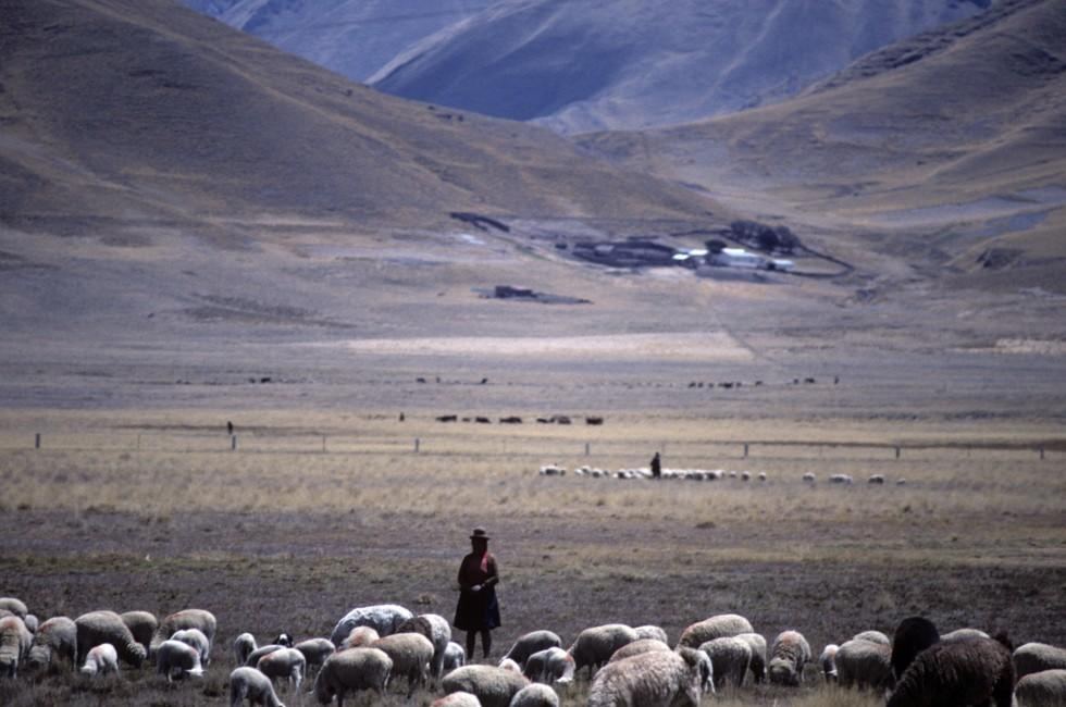 Sheep, Train, Landscape, Mountains, The Southern Coast, Peru