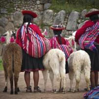 Girls, Alpacas, Sacsayhuaman, Cusco and the Sacred Valley, Peru