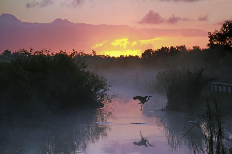 Sunset, Heron, Everglades National Park, Florida, USA