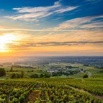 Beaujolais Vineyard, Beaujolais, France