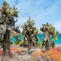 Cacti, Coastline, The Galapagos Islands, Ecuador